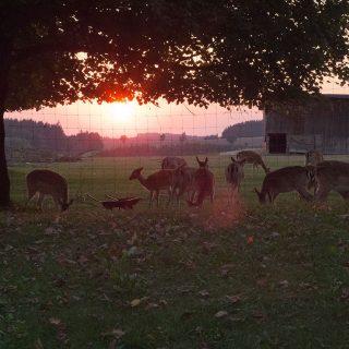 Wildgehege im Sonnenuntergang