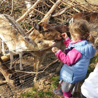 Kinder beim Füttern von Wild