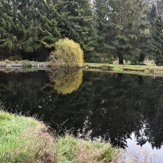 Unser Angelteich im Waldgebiet