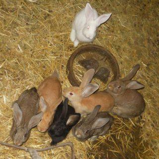 Unsere Kaninchen auf dem Hof