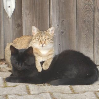 Katzen auf unserem Hof